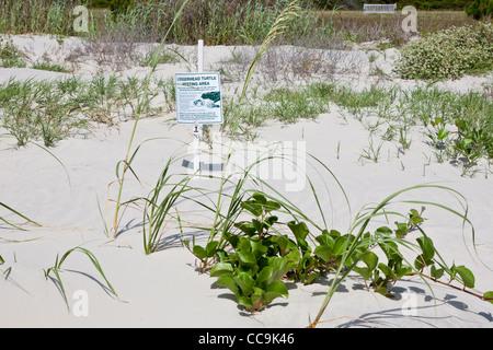Schild am Strand zeigt einen geschützten Unechten Karettschildkröte Verschachtelung Bereich in den Dünen auf Jekyll - Stockfoto
