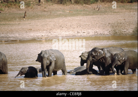 Elefantenfamilie, Kabini River, nagarhole Nationalpark, kodagu, Mysore, Karnataka, Indien - vit 80682 - Stockfoto