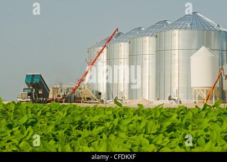 Mitte Wachstumsfeld Soja Getreide bins(silos) im Hintergrund, Lorette, Manitoba, Kanada - Stockfoto