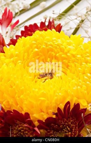 Rangoli Kolam Blumen gemacht in den Pudding Fabrik Birmingham und indische Volkskunst - Stockfoto