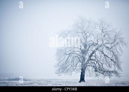 Ein einsamer Baum gegen eine Schneelandschaft - Stockfoto