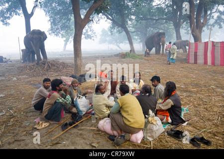 Gruppe von Mahuts gemeinsam sitzen vor ihren Elefanten im Haathi Basar, Sonepur Mela, Sonepur, Bihar, Indien - Stockfoto