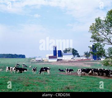 HOLSTEIN MOLKEREI HERDE, WISCONSIN - Stockfoto
