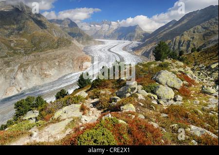 Großen Aletschgletscher, UNESCO-Weltnaturerbe Jungfrau-Aletsch-Bietschhorn Region, Goms, Wallis, Schweiz - Stockfoto