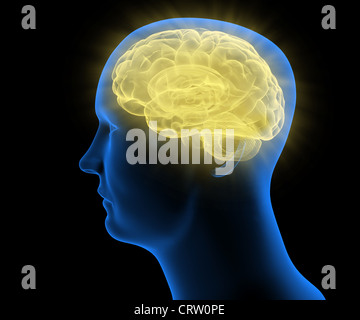 Stilisierte medizinische Illustration eines menschlichen Kopfes - Stockfoto