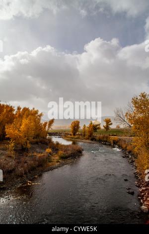 Herbstfarben während eines Schneesturms am Truckee River im Wadsworth Nevada - Stockfoto