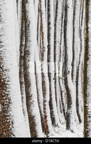 Winter-Silhouetten, Niedersachsen, Deutschland - Stockfoto