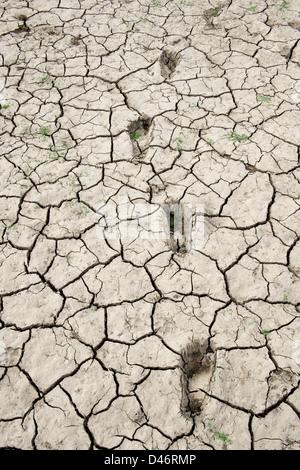 Footprints in trockenen Knacken Ton See bed Boden in der indischen Landschaft. Andhra Pradesh, Indien - Stockfoto