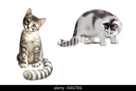 Kleine graue Kätzchen, ausgewachsene Katze Warnung nach unten - Stockfoto
