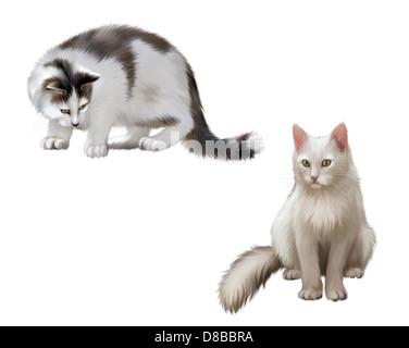 weiße und graue Kätzchen, ausgewachsene Katze Warnung nach unten. Weiße Katze sitzend, isolierte Abbildung auf weißem - Stockfoto