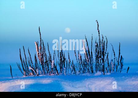 Letzten Winter Licht und aufgehenden Mond an Moskjaera im See Vansjø in Østfold, Norwegen. Vansjø ist ein Teil des - Stockfoto