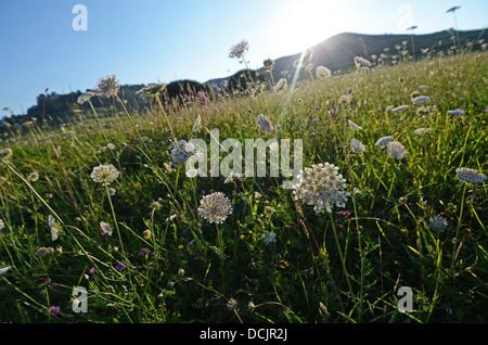 Pflanzen und Blumen in einem Feld von Niembro, Asturien, Spanien - Stockfoto