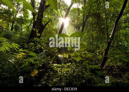 Sonnenaufgang in 265 Hektar Regenwald Metropolitan Park, Republik von Panama. - Stockfoto