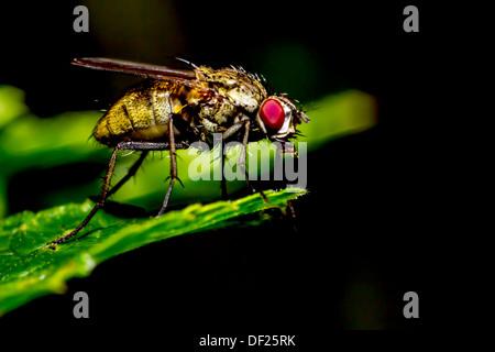 Porträt einer Fliege - Stockfoto