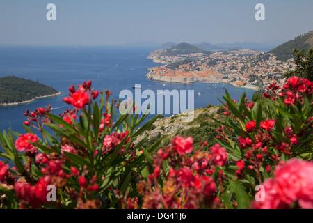 Ansicht der alten Stadt von oben Stadt, UNESCO-Weltkulturerbe, Dubrovnik, Dalmatien, Dalmatien, Kroatien, Europa - Stockfoto
