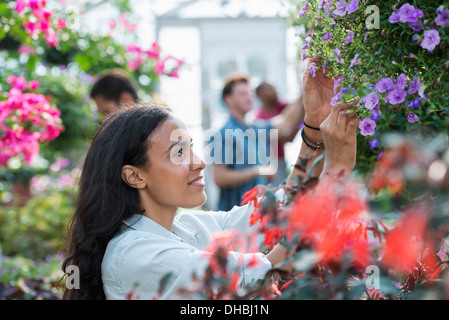 Ein Gewächshaus in einer Gärtnerei Bio Blumen zu wachsen. Eine Gruppe von Menschen, die arbeiten. - Stockfoto