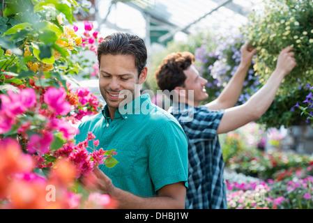 Ein Gewächshaus Bio Blumen zu wachsen. Zwei Männer arbeiten, deadheading Pflanzen und Blumenampeln überprüfen. - Stockfoto