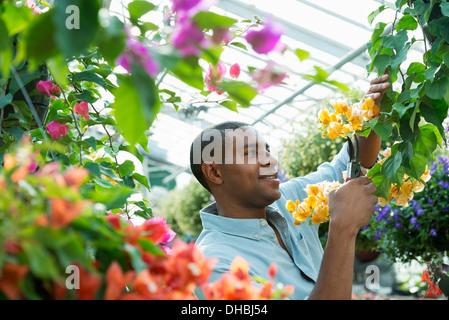 Ein Gewächshaus in einer Gärtnerei Bio Blumen zu wachsen. Mann arbeiten, Überprüfung und Pflege von Blumen. - Stockfoto