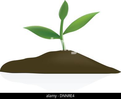 Junge Pflanze im dunklen Boden isoliert auf weißem Hintergrund - Stockfoto