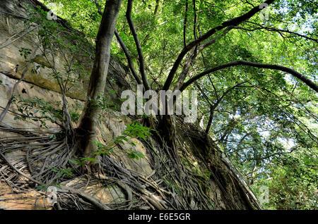 Niedrigen Winkel Ansicht von Bäumen auf Kalkstein Felswand - Stockfoto