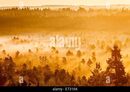 Nebligen Bäume wachsen im Torronsuo Sumpf in Finnland an einem frühen Morgen. - Stockfoto