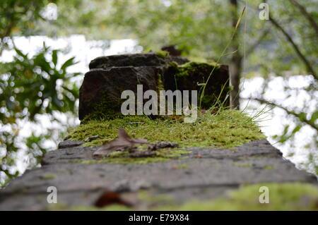 Moos bedeckt Ziegelwand in Wäldern - Stockfoto