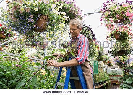 Arbeiter Rebschnitt Blumenampel Pflanzen Gärtnerei Gewächshaus - Stockfoto