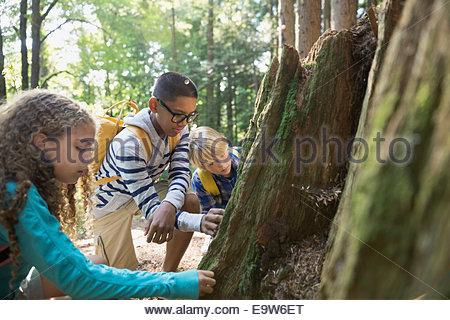 Jungen und Mädchen untersuchen Baumstamm im Wald - Stockfoto