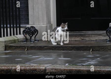 London, UK. 17. November 2014. Larry die Downing Street Katze gesehen in der Downing Street in London. - Stockfoto
