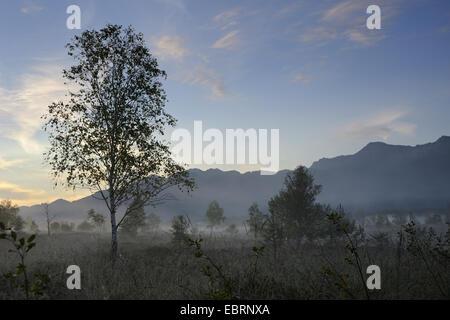 Naturschutzgebiet Kendlmuehlfilzen, Blick auf Moorland, Nebel vor Sonnenaufgang, Grassau, Chiemgau, Bayern, Deutschland - Stockfoto