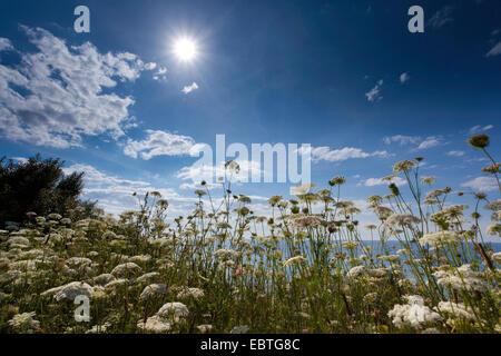 Blick über den Rand der Steilküste bedeckt mit Blumen, Deutschland, Mecklenburg-Vorpommern, Wustrow - Stockfoto