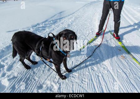 Langlauf-Colorado - Stockfoto