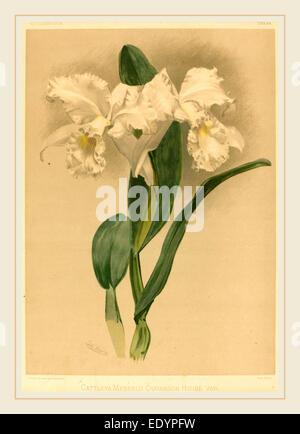 Gustav Leutzsch nach Henry George Moon (Deutsch (?), aktive des 19. Jahrhunderts), Cattleya Mendelii Quorndon Haus - Stockfoto