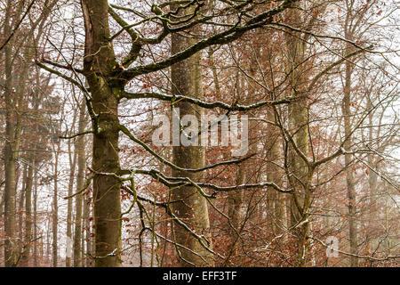 Verschneiten Wälder im Süden von Deutschland - Stockfoto