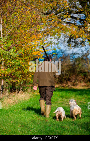 Mann mit Schrotflinte, Spiel in Wäldern mit clumber spaniel Gewehr Hunde, Oxfordshire, England - Stockfoto