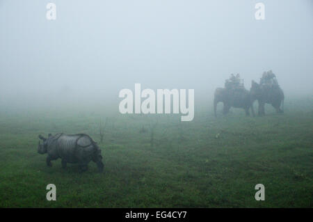 Leute Reiten Elefanten Panzernashorn (Rhinoceros Unicornis) in den Nebel Sonnenaufgang zu beobachten. Chitwan Nationalpark - Stockfoto