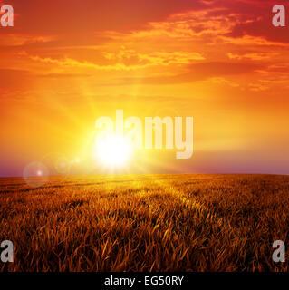Intensive Sonne auf einer ruhigen Wiese absetzen - Stockfoto