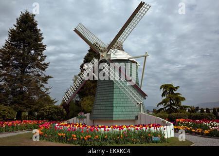 WASHINGTON - die Unterschrift Windmühle und Tulpen in einem Demo-Garten am RoozenGaarde Birne Farm im Skagit Valley. - Stockfoto