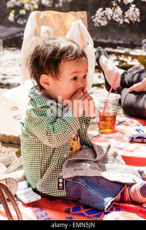 Japan, Nishinomiya, Shukugwa. Niedlichen zwei Jahre alten japanischen Jungen draußen zu sitzen, mit beiden Händen, - Stockfoto