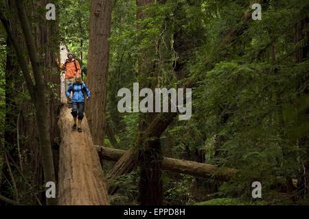 Paar Wandern in den Redwood-Wäldern von Big Sur. - Stockfoto