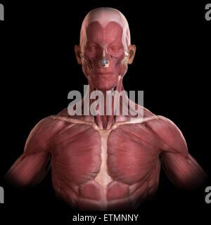 Konzeptbild der Muskeln des Gesichts und des oberen Körpers. - Stockfoto