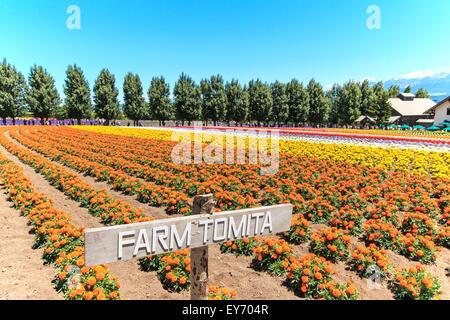 Furano, Japan - Juli 8,2015: Blumen der Tomita Farm in Hokkaido mit einigen Touristen im Hintergrund. - Stockfoto