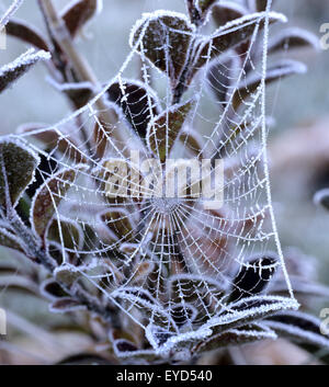 Spinnwebe Mit Rauhreif, Winter, Schnee, Rauhreif - Stockfoto