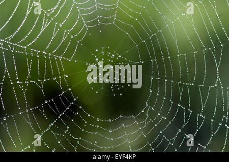 Spinnwebe Im Gegenlicht, Landschaft - Stockfoto