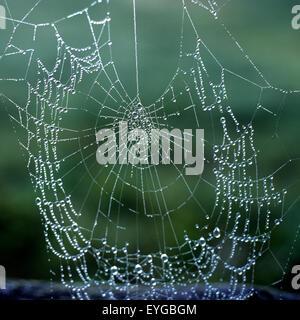 Spinnennetz; Tau, Tautropfen, Basel-Landschaft - Stockfoto