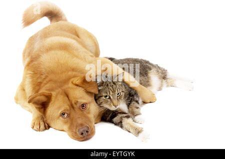 Hund und Katze auf weißem Hintergrund - Stockfoto