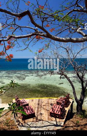 Royal Poinciana, extravaganten, Flame Tree (Delonix Regia), Traum Strand mit Flame Tree an der Westküste von Madagaskar, - Stockfoto