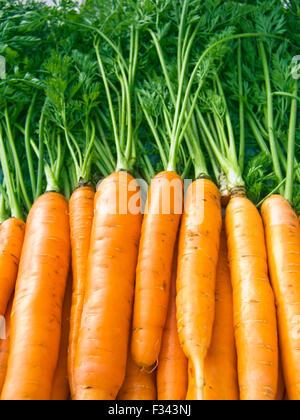 Ein Haufen von schönen Karotten auf einer Theke - Stockfoto