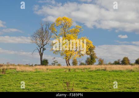 Baum, der auf UK Landschaft sich zeichnet - Stockfoto