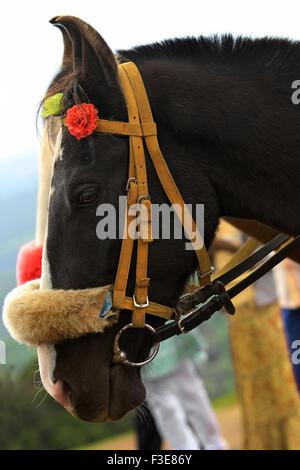Schwarzes Pferd - Stockfoto